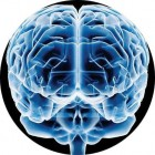 http://blogideias.com/wp-content/uploads/2010/05/cerebro-140x140.jpg