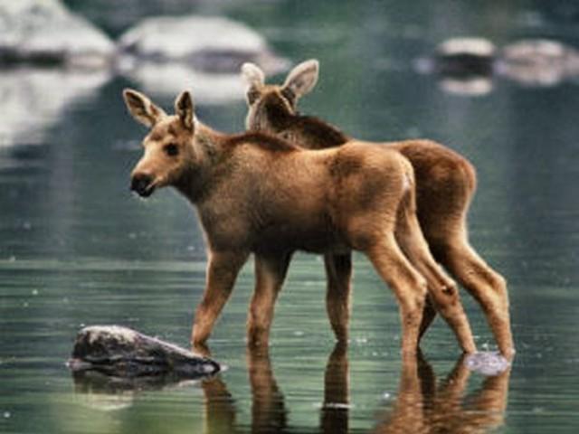 Gêmeos do mundo animal